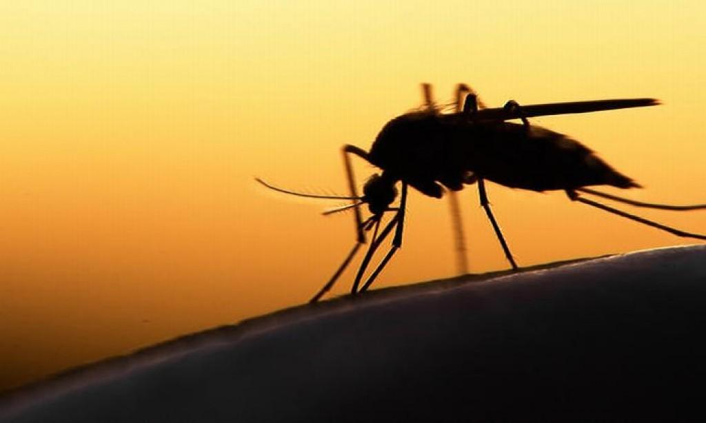 https: img.okezone.com content 2020 05 28 512 2221104 enam-warga-klaten-meninggal-akibat-dbd-di-tengah-pandemi-corona-rsKfhqHsAH.jpg