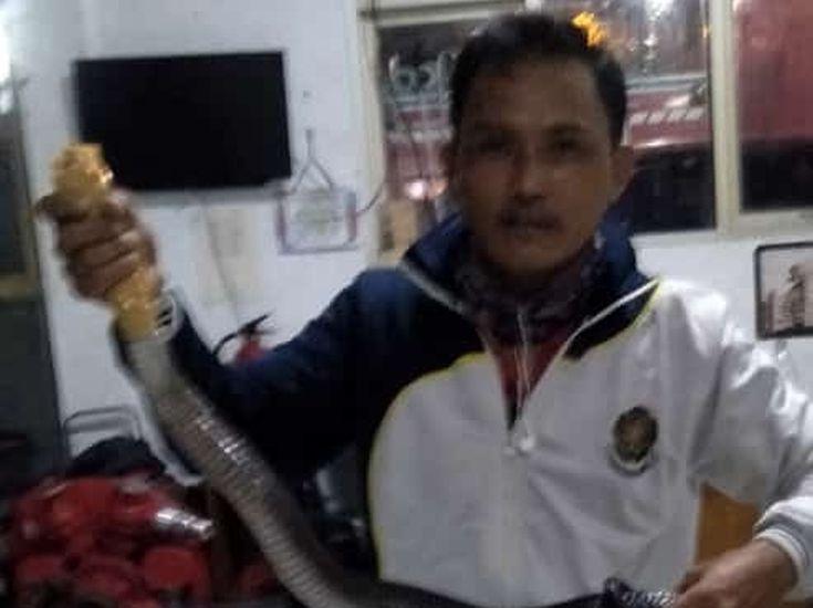 https: img.okezone.com content 2020 06 04 338 2224516 warga-bogor-dikagetkan-ular-kobra-1-5-meter-merayap-di-dapur-USeMj8TXwu.jpg