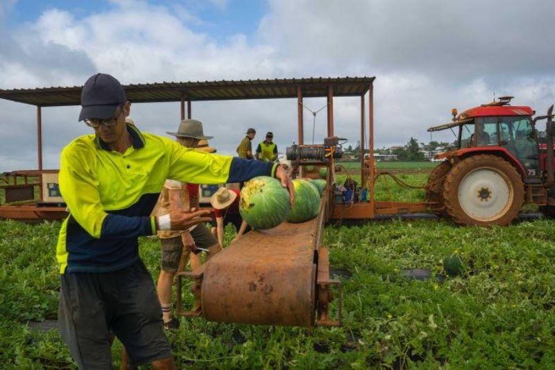 https: img.okezone.com content 2020 06 06 18 2225508 aplikasi-backpicker-hubungkan-pekerja-dan-pemilik-lahan-pertanian-di-australia-A5No9571V7.jpg