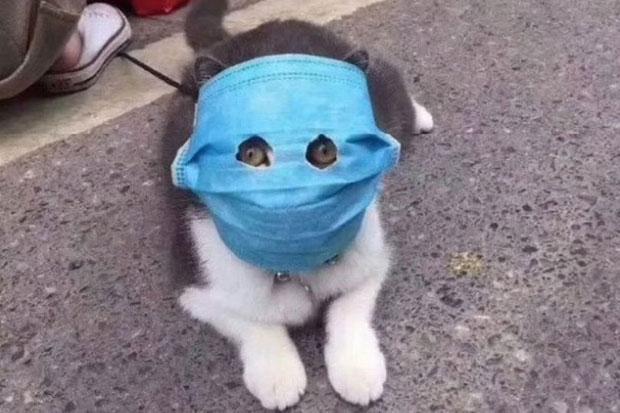https: img.okezone.com content 2020 06 08 56 2226193 penelitian-ungkap-kucing-mudah-terinfeksi-covid-19-Ii7EZCrTrh.jpg