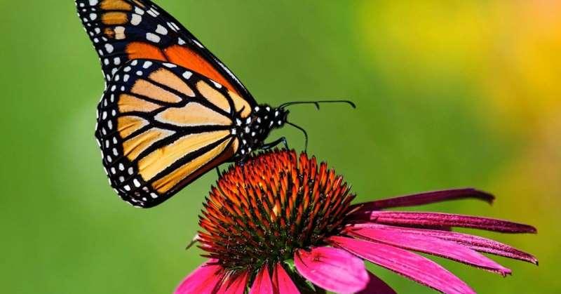 https: img.okezone.com content 2020 06 08 56 2226243 lipi-sebut-kiamat-serangga-keselamatan-bumi-bisa-terancam-ppGHWsQEzY.jpg