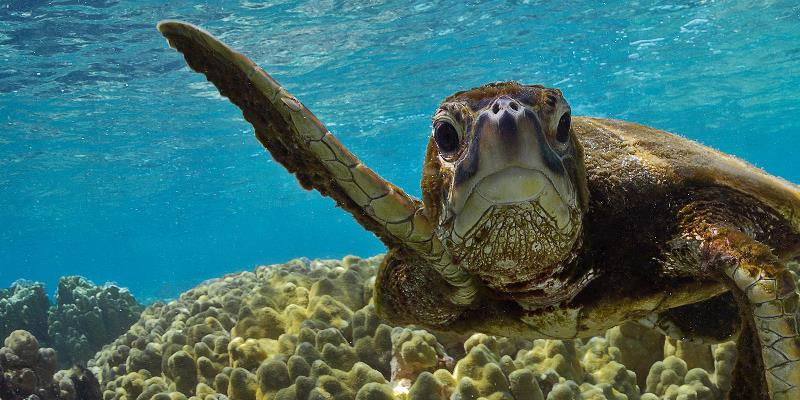 https: img.okezone.com content 2020 06 09 56 2226699 ancaman-serius-sampah-bisa-mengganggu-perkembangan-biota-laut-XVw80PaqcG.jpg