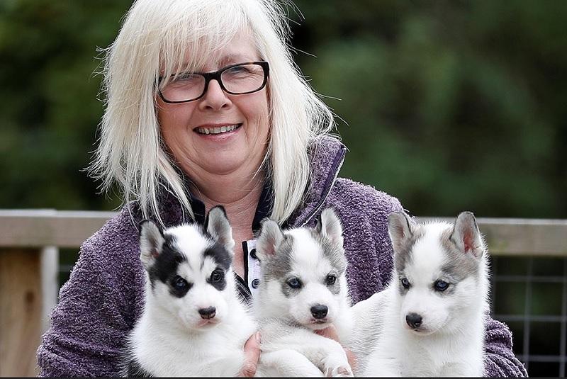 https: img.okezone.com content 2020 06 11 196 2228542 anak-anjing-jadi-teman-warga-inggris-selama-lockdown-uONKzZheru.jpg