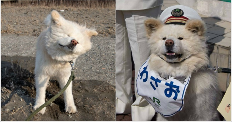 https: img.okezone.com content 2020 06 11 612 2228504 wasao-anjing-ikonik-asal-jepang-meninggal-dunia-di-usia-13-tahun-gJGm4VLUSw.jpg
