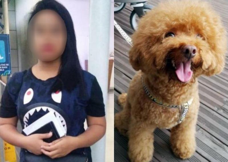 https: img.okezone.com content 2020 06 12 18 2228776 lempar-anjing-majikan-dari-lantai-tiga-prt-asal-indonesia-terancam-hukuman-penjara-lsSCkN1os6.jpg