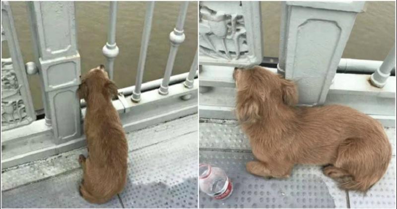 https: img.okezone.com content 2020 06 12 612 2229126 berharap-kembali-potret-anjing-setia-menunggu-di-tempat-pemiliknya-bunuh-diri-bikin-haru-2ismL4qiUL.jpg