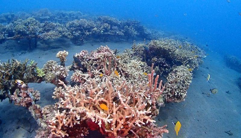 https: img.okezone.com content 2020 06 13 406 2229414 bangun-csc-kkp-berharap-bali-bisa-punya-coral-park-KPplvDm7G2.jpg
