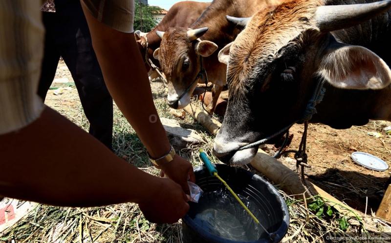 https: img.okezone.com content 2020 06 15 616 2230081 panduan-aman-jual-beli-hewan-kurban-di-masa-pandemi-covid-19-loM7Br12aE.jpg