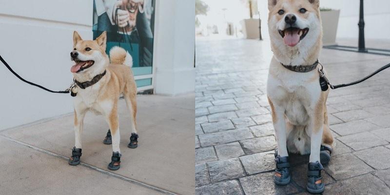 https: img.okezone.com content 2020 06 16 194 2230911 lucunya-sepatu-khusus-anjing-dijamin-makin-keren-dan-kece-pkBjTxiJuA.jpg