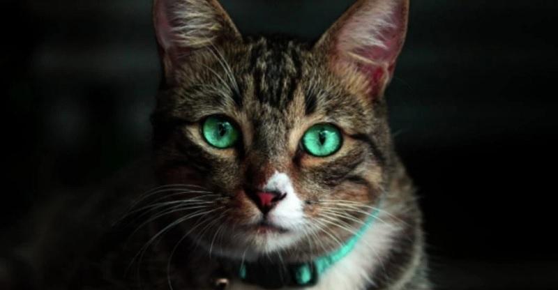 https: img.okezone.com content 2020 06 16 612 2231132 gaya-makan-kucing-mirip-kuda-nil-curi-perhatian-netizen-tebak-tebak-penyebabnya-9F1FUBkKTo.jpg