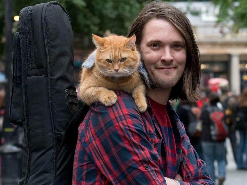 https: img.okezone.com content 2020 06 17 612 2231617 kucing-oren-paling-terkenal-mati-rip-bob-jadi-trending-topik-lKOtepuIUe.jpg