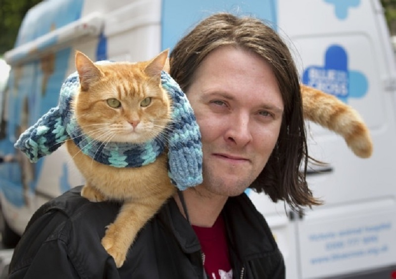 https: img.okezone.com content 2020 06 17 612 2231639 kematian-kucing-oren-bob-trending-di-twitter-cat-lovers-berduka-ukjRelzcBO.jpg
