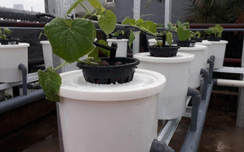 https: img.okezone.com content 2020 06 19 196 2233197 tips-menanam-melon-hidroponik-di-masa-pandemi-covid-19-kim2JOHur7.jpg