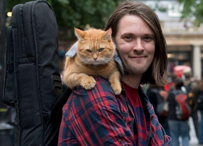 https: img.okezone.com content 2020 06 19 330 2233120 bob-si-kucing-oren-mati-begini-pandangan-rasulullah-terhadap-kucing-ZInp6Pcly7.JPG