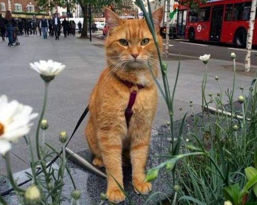 https: img.okezone.com content 2020 06 19 330 2233130 4-alasan-kucing-jadi-hewan-kesayangan-nabi-muhammad-wYe9eTuV5A.JPG