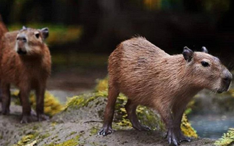 https: img.okezone.com content 2020 06 22 406 2234216 sejarah-ragunan-kebun-binatang-pertama-di-indonesia-yang-diinisiasi-raden-saleh-FVySQgh5Q4.jpg