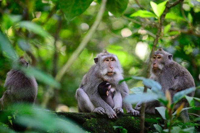 https: img.okezone.com content 2020 06 23 510 2235165 lawan-monyet-ekor-panjang-petani-gunungkidul-bertahun-tahun-tak-pernah-menang-KlRpXJxCBh.jpg