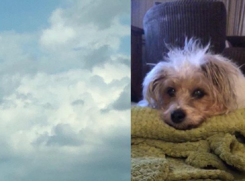 https: img.okezone.com content 2020 06 26 612 2236792 heboh-foto-awan-mirip-wajah-anjing-kisah-di-baliknya-bikin-haru-qEbKMzR9zY.jpg