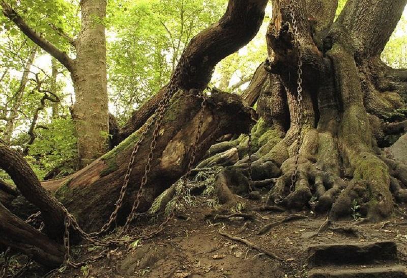 https: img.okezone.com content 2020 06 26 612 2237058 kisah-pohon-ek-tua-misterius-yang-dibelenggu-rantai-besi-jowJISnQGJ.jpg