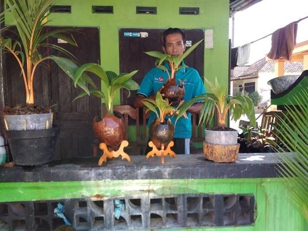 Sepi Job Seniman Campursari Cari Cuan Di Bisnis Bonsai Kelapa
