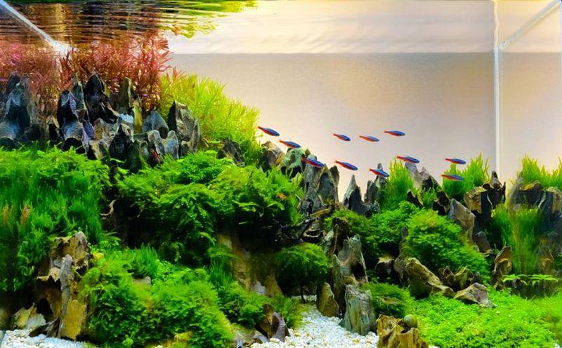 https: img.okezone.com content 2020 07 03 612 2240858 5-ikan-yang-cocok-dipelihara-dalam-aquascape-Wx9l8sSU5e.jpg