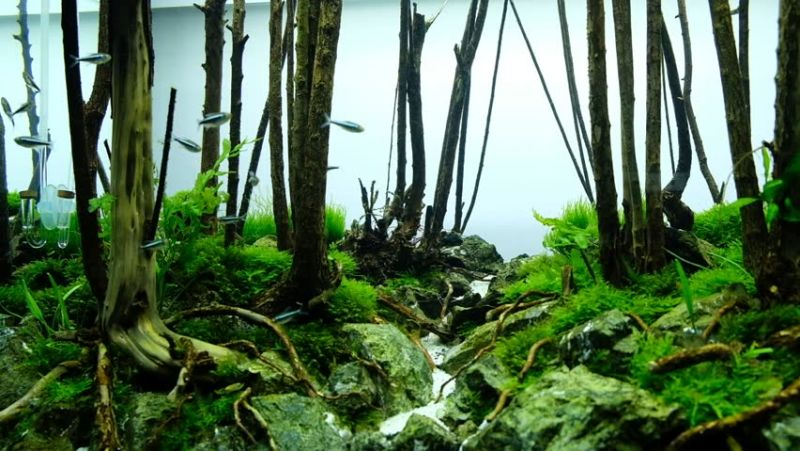 https: img.okezone.com content 2020 07 03 612 2240892 5-tanaman-terbaik-untuk-aquascape-jangan-sampai-salah-pilih-du47cco7gB.jpg