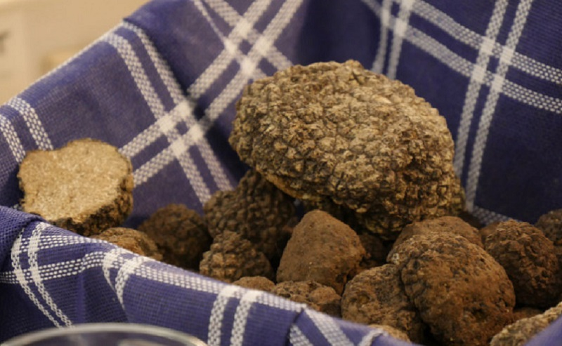 https: img.okezone.com content 2020 07 12 298 2245200 petani-ini-bagi-bagi-jamur-truffle-senilai-rp531-juta-akibat-pandemi-covid-19-IoemV4KqJ2.jpg