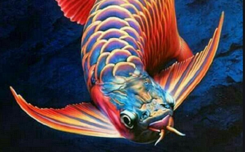 Daftar Ikan Yang Sedang Tren Selama Pandemi Covid 19 Okezone Lifestyle