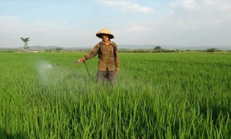 https: img.okezone.com content 2020 07 13 512 2245569 petani-gunakan-micin-penyedap-rasa-untuk-suburkan-tanaman-dhqdZ44Sca.jpg