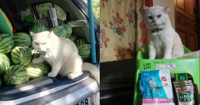 https: img.okezone.com content 2020 07 14 612 2246232 kenalan-dengan-pearl-kucing-viral-penjaga-semangka-XiolSYmOAV.jpg