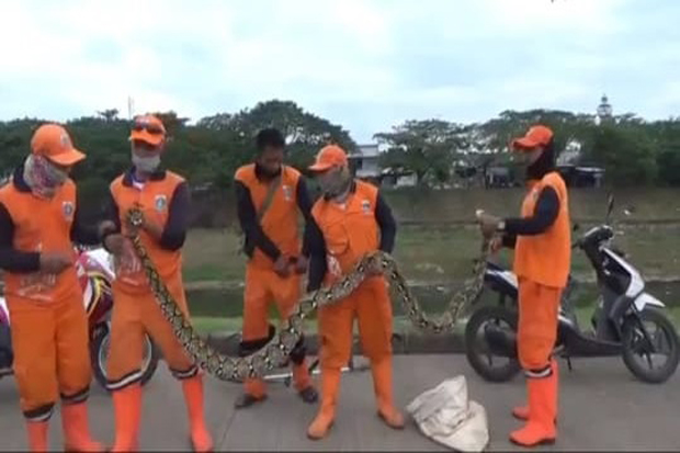 https: img.okezone.com content 2020 07 15 338 2247010 hati-hati-banyak-ular-sanca-di-bkt-tQb2lUyQtR.jpg