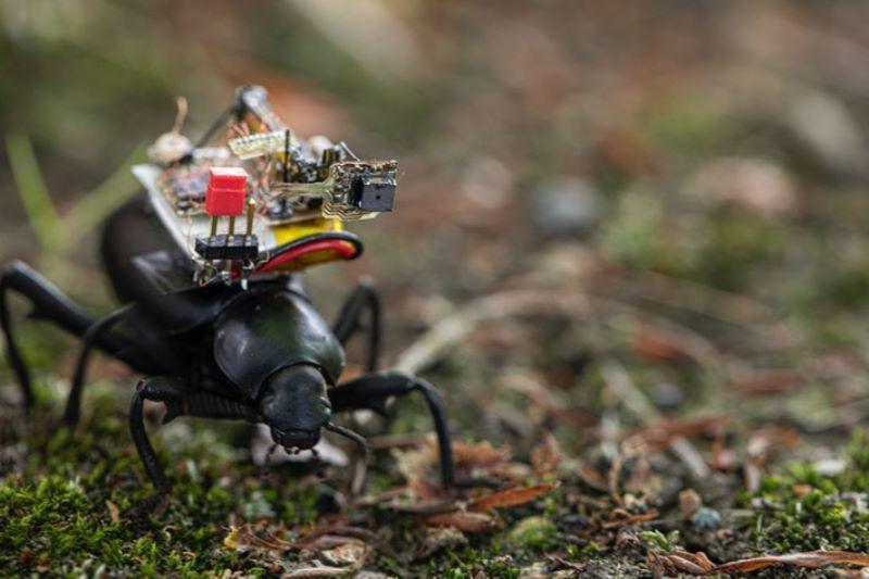 https: img.okezone.com content 2020 07 16 16 2247518 canggih-robot-serangga-ini-dilengkapi-kamera-super-kecil-HjkOSISfoM.jpg