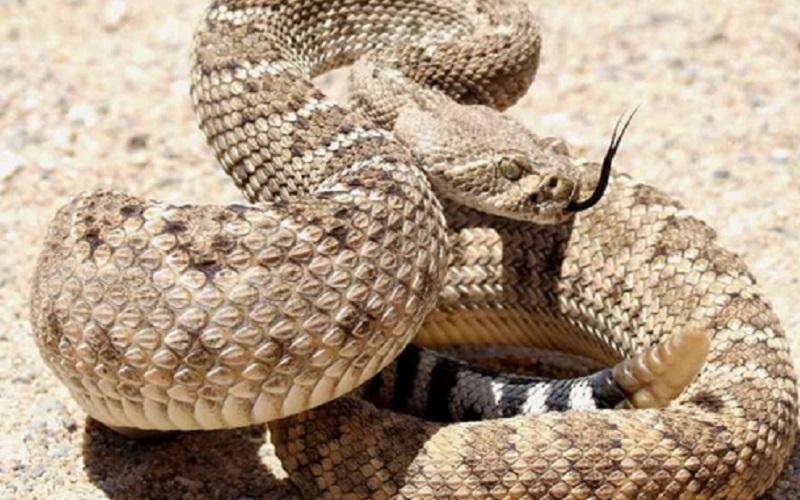 https: img.okezone.com content 2020 07 16 612 2247292 hari-ular-sedunia-ini-manfaat-ular-bagi-umat-manusia-rzi5CfIpBS.jpg