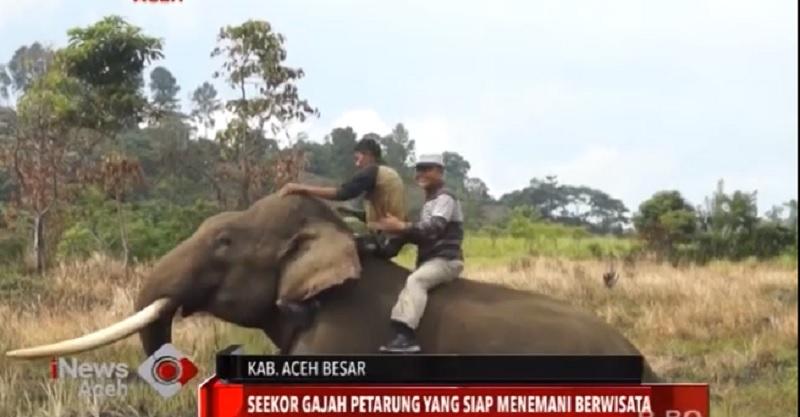 https: img.okezone.com content 2020 07 17 406 2248150 wisata-baru-di-aceh-menunggangi-gajah-di-suka-mulya-OXVDZjePi6.jpg