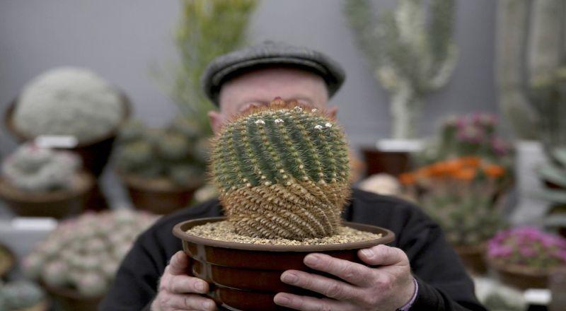 https: img.okezone.com content 2020 07 17 470 2247995 bikin-rumah-makin-cantik-dengan-kaktus-begini-cara-merawatnya-P3YkHsRnma.jpg
