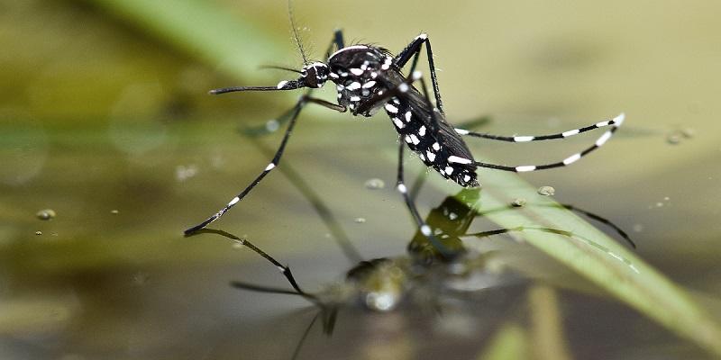 https: img.okezone.com content 2020 07 23 16 2250835 teknik-serangga-steril-mampu-kendalikan-populasi-nyamuk-x6BE2aLTiq.jpg