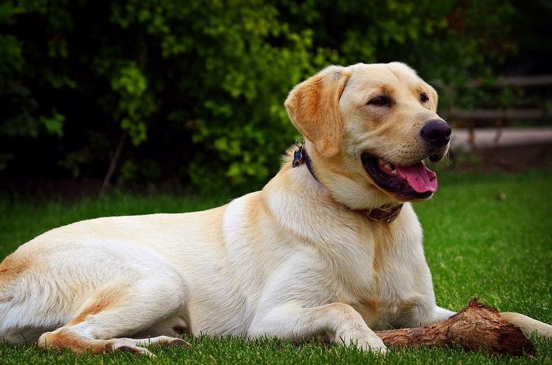 https: img.okezone.com content 2020 07 24 16 2251305 anjing-dilatih-untuk-deteksi-penderita-covid-19-6a7b8939wl.jpg