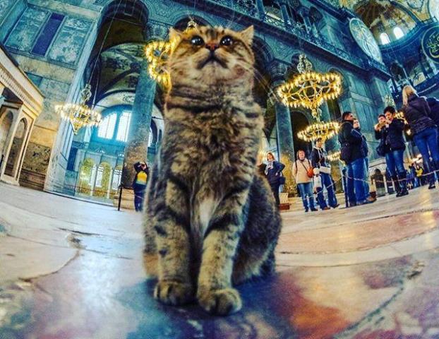 https: img.okezone.com content 2020 07 25 614 2251993 hagia-sophia-jadi-masjid-gli-si-kucing-penjaga-boleh-tetap-tinggal-sTdJlixbsM.jpg