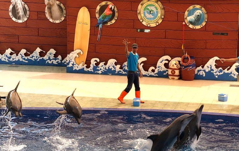 https: img.okezone.com content 2020 07 27 406 2252958 taman-safari-lumba-lumba-kembali-dibuka-masker-dan-face-shield-wajib-digunakan-hfszR4IVIQ.jpg