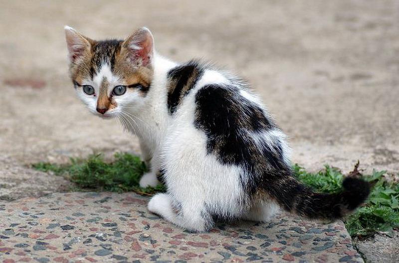 https: img.okezone.com content 2020 07 30 18 2254543 aksi-bejat-bocah-15-tahun-perkosa-anak-kucing-hingga-mati-MbUNtMCMyA.jpg
