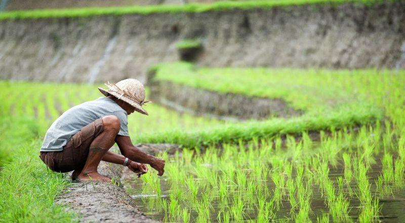 https: img.okezone.com content 2020 08 03 320 2256321 ntp-naik-kesejahteraan-petani-meningkat-BzUcRjqMcC.jpg