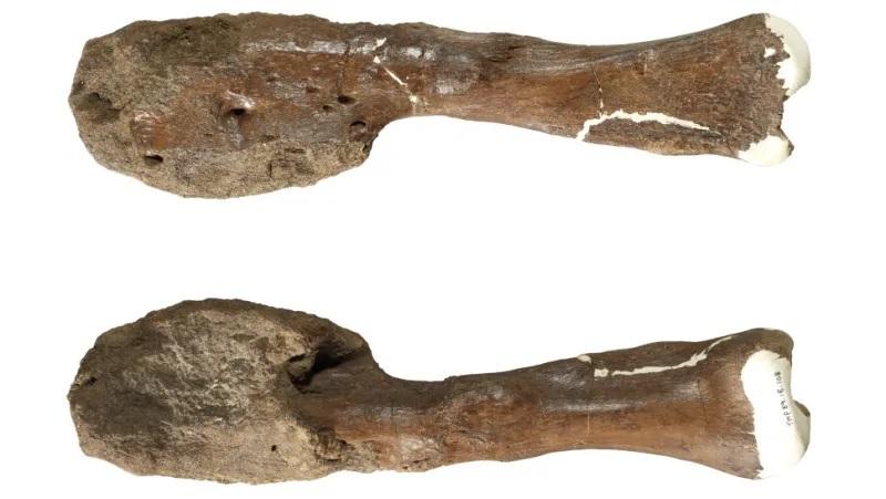 https: img.okezone.com content 2020 08 04 16 2256685 ahli-paleontologi-temukan-bukti-dinosaurus-mengidap-kanker-ganas-aOCTu6bQsK.jpg