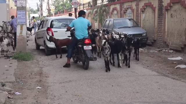 https: img.okezone.com content 2020 08 04 614 2256842 melihat-perbedaan-idul-adha-di-india-hewan-kurban-lebih-banyak-kambing-5vVUmI657j.jpg