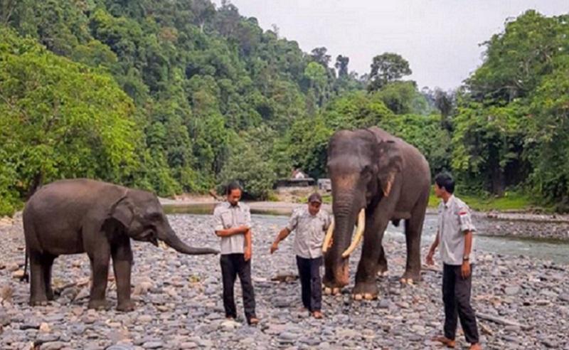 mengintip eksotisme kawasan wisata tangkahan di sumatera utara surga tersembunyi nicholas saputra 9k9RbJfVo9