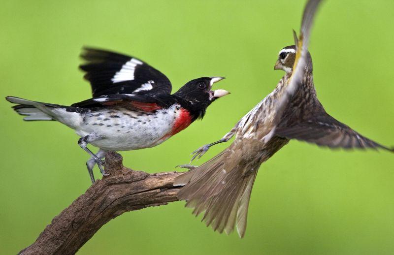 https: img.okezone.com content 2020 08 07 614 2258555 burung-jadi-inspirasi-bagi-manusia-tercatat-dalam-alquran-dan-diakui-sains-Z2pGAVZClg.jpg