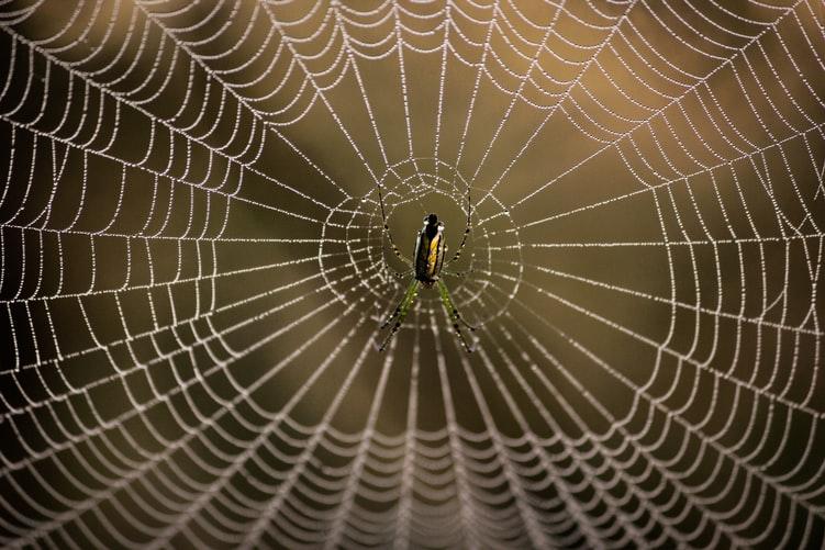 https: img.okezone.com content 2020 08 07 614 2258712 alquran-dan-sains-jaring-laba-laba-lebih-kuat-dari-baja-dengan-ukuran-sama-TIn9WjcDQv.jpg