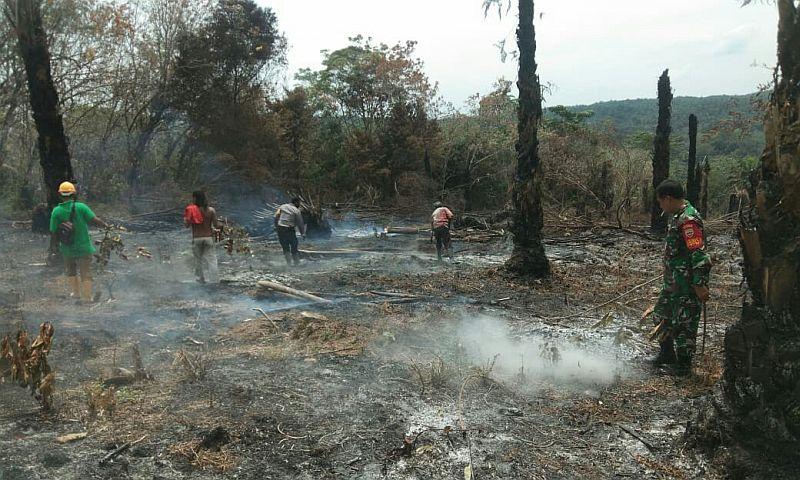 https: img.okezone.com content 2020 08 11 608 2260654 2-hektare-lahan-sawit-milik-warga-kebakaran-PivdJwOZWv.jpg