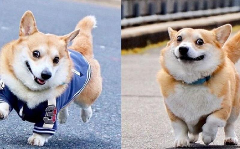 https: img.okezone.com content 2020 08 11 612 2260640 gen-si-anjing-berwajah-ekspresif-yang-viral-di-medsos-48oyoOfeT5.jpg