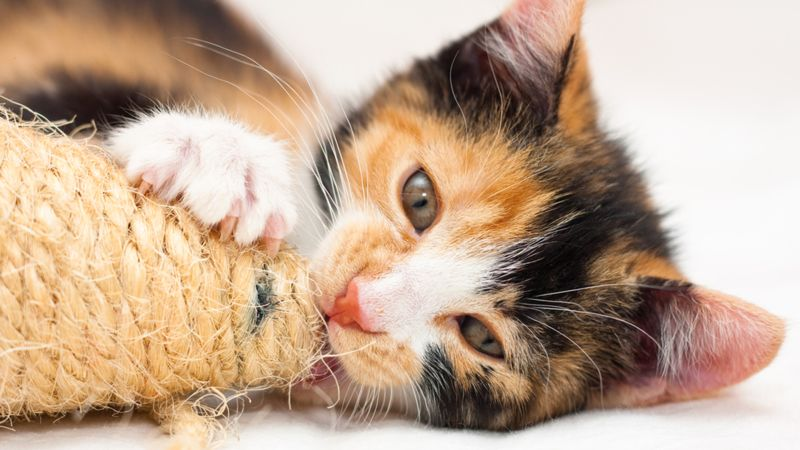 https: img.okezone.com content 2020 08 14 330 2262101 bolehkah-berwudhu-dengan-air-bekas-jilatan-kucing-y0lXRJbcRE.jpg