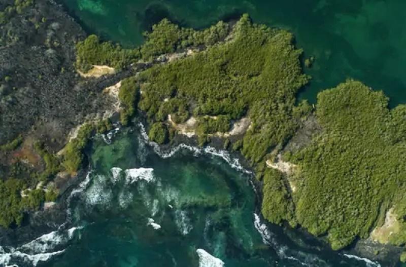 https: img.okezone.com content 2020 08 19 16 2264239 ilmuwan-temukan-30-spesies-baru-di-perairan-galapagos-kb8U999xjn.jpg